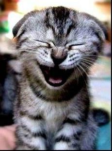 cat happy.jpg
