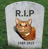 Gato Inmortal
