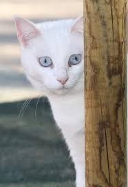 Helena_cat