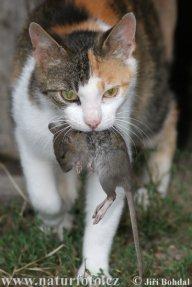 gatocorrupto